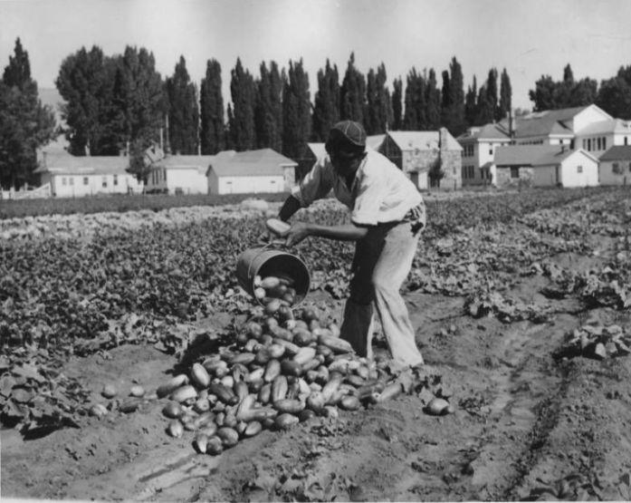 Сбор урожая, 1930-е годы. /Фото:animalworld.com.ua