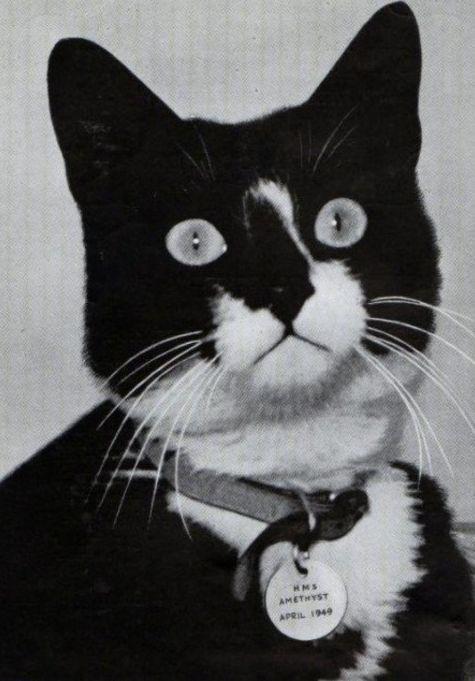 Кот Саймон - герой британского флота. /Фото: livejournal.com