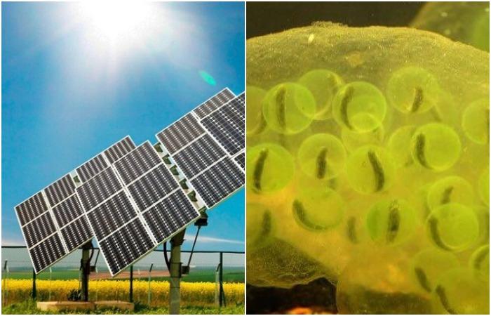 Трудно представить, что именно саламандры натолкнули людей на создание солнечной батареи. /Фото: nauka.boltai.com, ichip.ru