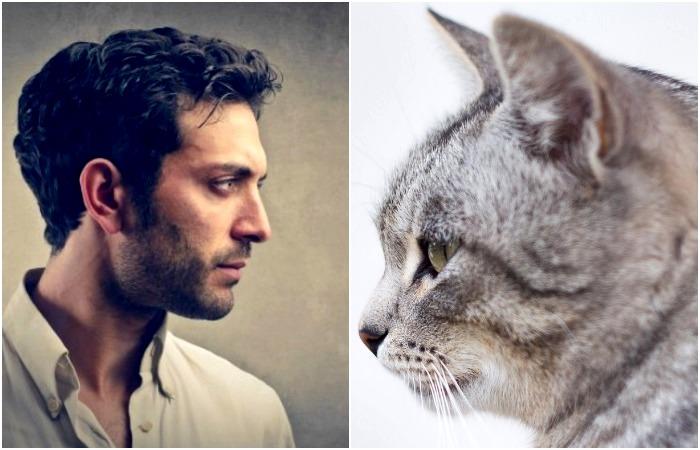 То, что коты умеют шевелить ушами, а мы почти разучились это делать - результат эволюции.