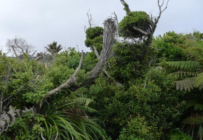 Живописные новозеландские джунгли. /Фото: livejournal.com