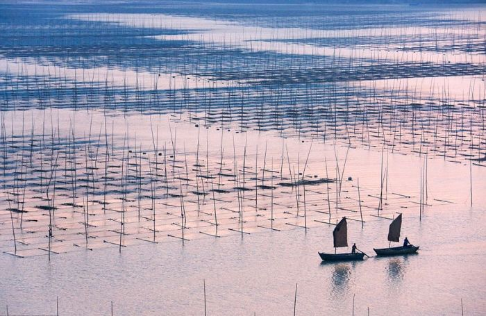 Ферма водорослей в Китае. /Фото: animalworld.com.ua