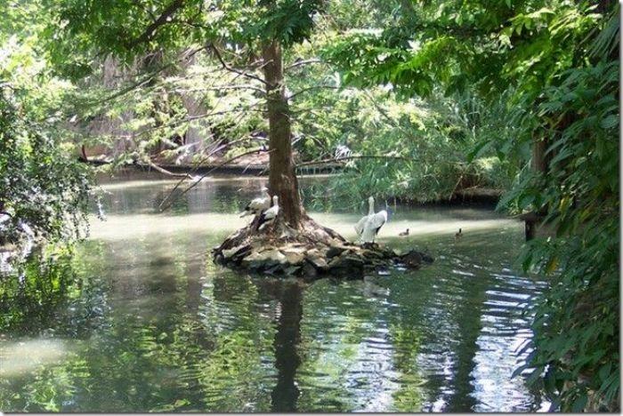 Приключения в водах Амазонки. / Фото: lifeglobe.net