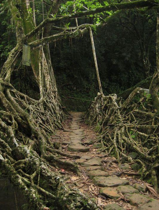 Уникальные сооружения в джунглях. /Фото: animalworld.com.ua