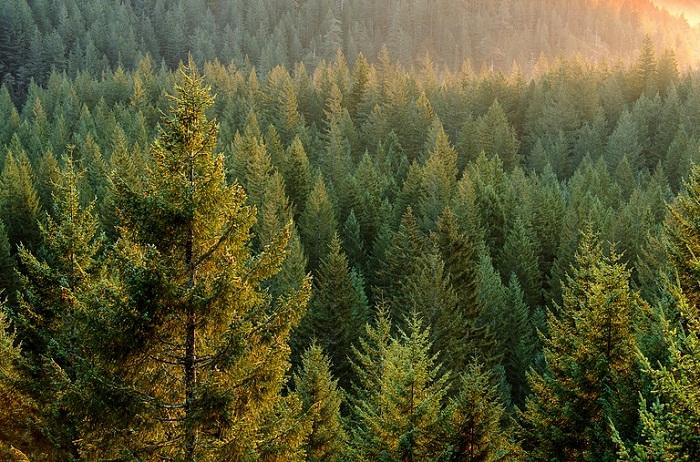 На наших просторах так много тайги, что ее во всем мирке так называют. /Фото: naurok.com.ua