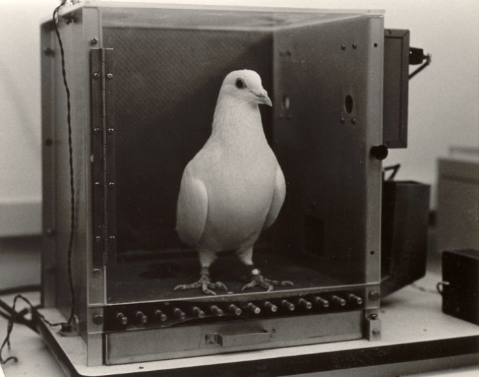 Кто бы мог подумать, что голуби могли стать частью бомбы. /Фото: lafayette.edu