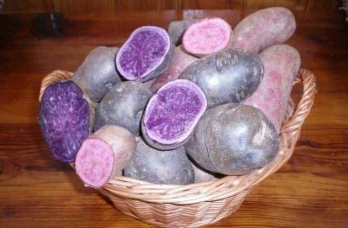 Разнообразьте картофельные краски в своём рационе. /Фото: milayaya.ru