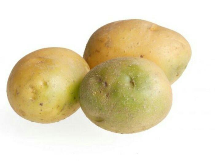 Зелёная картошка всегда будет не полезной. Даже если она созревшая. /Фото: fermoved.ru