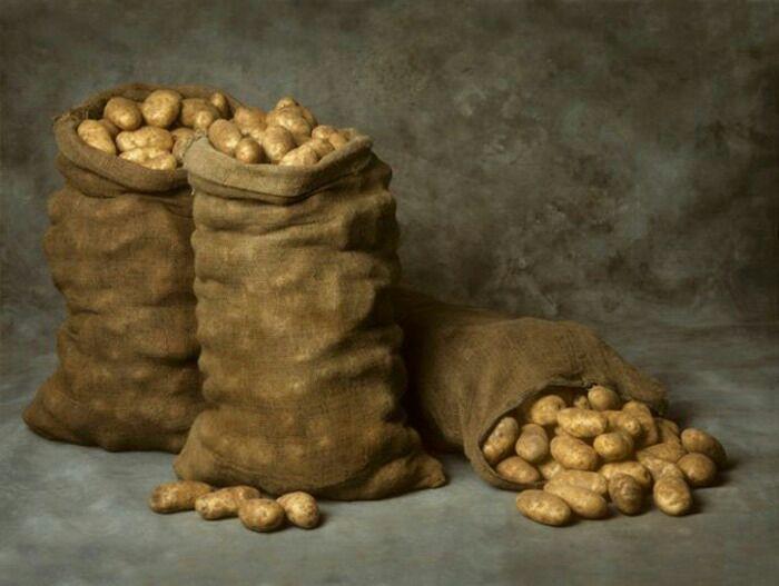 Картошка идёт в ногу с технологиями. /Фото: podvaldoma.ru