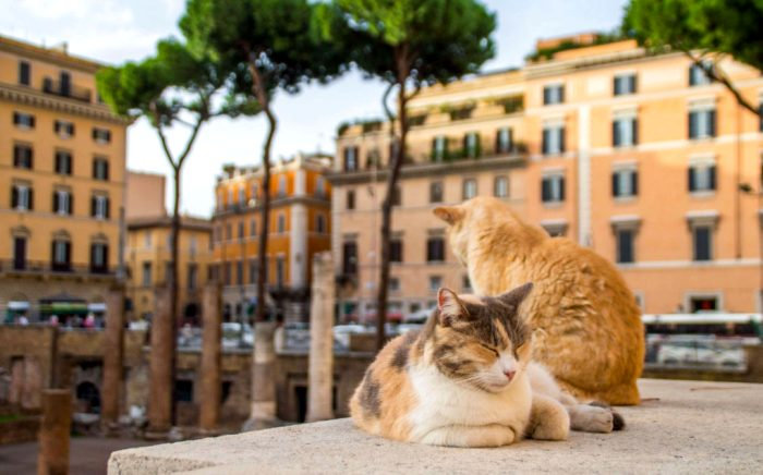 Современные котики отлично себя чувствуют на месте убийства Цезаря. /Фото: travelblissnow.com