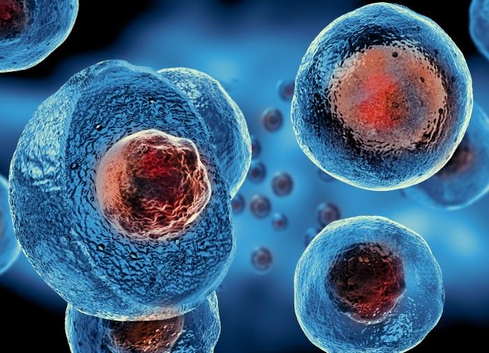 Стволовые клетки были открыты российским ученым. /Фото: meteo-tv.ru