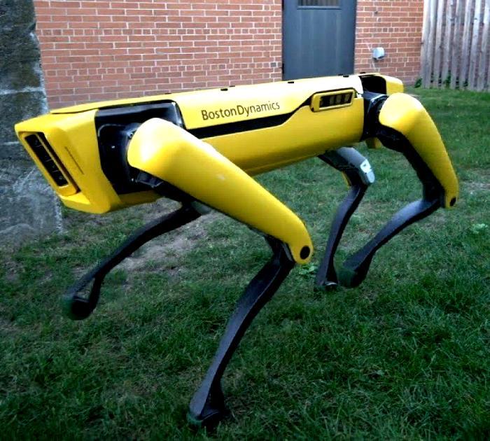 Робот-питомец для самых продвинутых хозяев. /Фото: bituk.media