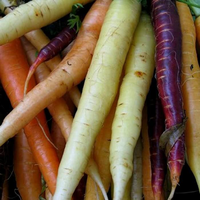 Морковка появилась на отечественных просторах давно, правда была не совсем рыжей. /Фото: organicauthority.com
