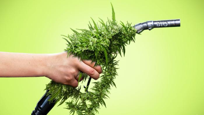 Биотопливо, которым мы всё ещё не владеем. /Фото: semyanich-shop-19.online