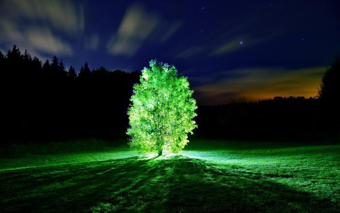 Ученые расширили возможности люминесценции растений. /Фото: oir.mobi
