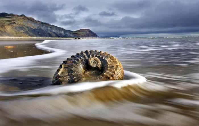 Тысячи застывших моллюсков разбросаны по британскому пляжу. /Фото: rest-trip.ru