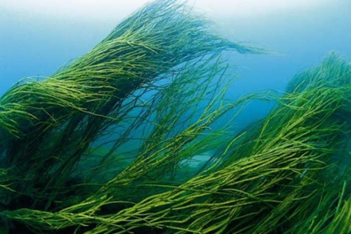 Колосились бы не хуже пшеницы. /Фото: liveinternet.ru