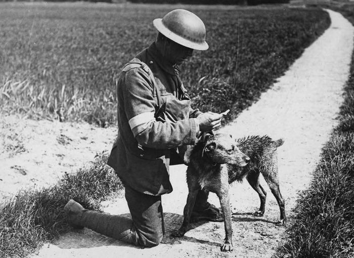 Тот случай, когда собаку назвали виновницей развязывания войны. /Фото: blogspot.com