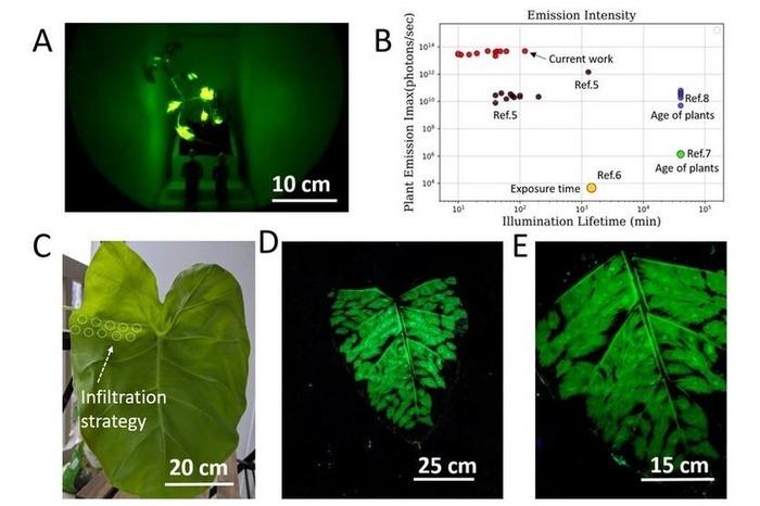 Учёные подробно описывают процесс создания живых светильников. /Фото: ferra.ru