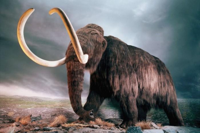 Кто бы мог подумать, что и этого гиганта все называют по-русски. /Фото: naked-science.ru