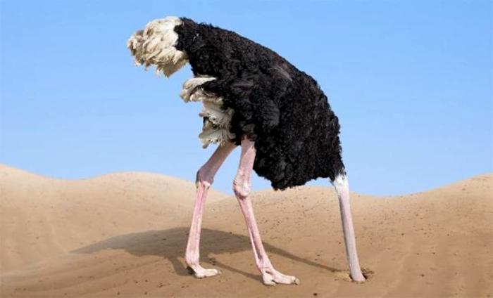 Самых больших птиц называют самыми трусливыми. /Фото: i-fakt.ru