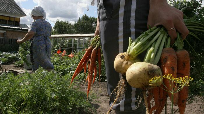 Для любой российской семьи наличие огорода, сада, дачи – это норма / Фото: realty.ria.ru