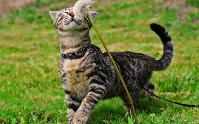 В пригороде Мельбурна, в Ноксе, хозяева кошек не имеют права выпускать своих кошачьих друзей свободно гулять по улице / Фото: klkfavorit.ru