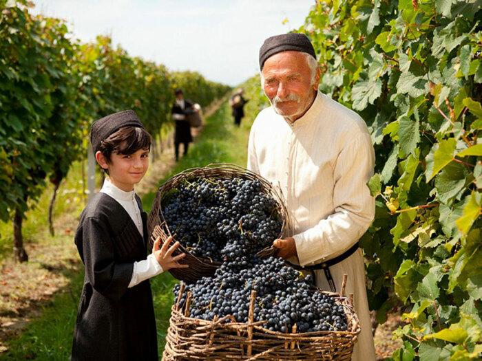В Грузии запустили программу по возрождению забытых сортов винограда / Фото: regnum.ru