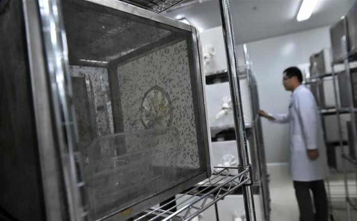 Зачем китайцы массово разводят комаров на специальном заводе (может, им своих мало)