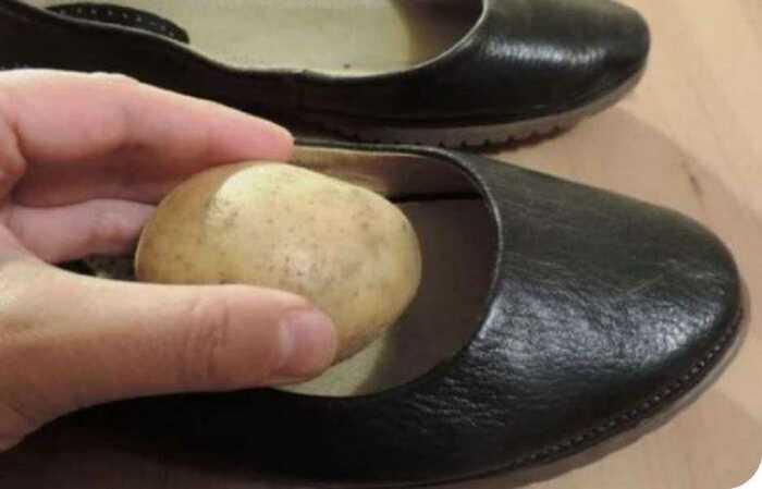 Картофель кладут в переднюю часть обуви и оставляют на ночь / Фото: megatopnews.ru