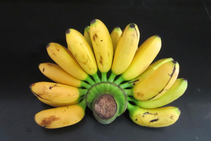 Те бананы, что поступают к нам на рынок – сладкие фруктовые, к которым относятся обычные бананы, бананы-беби, коричневые / Фото: 123ru.net