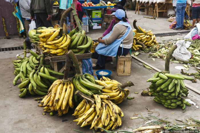 Еще есть кормовые очень большие бананы, по форме они практически прямые / Фото: turbina.ru