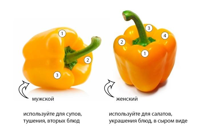 В женском болгарском перце больше семечек и сладости, в мужском - наоборот / Фото: simptomov.com