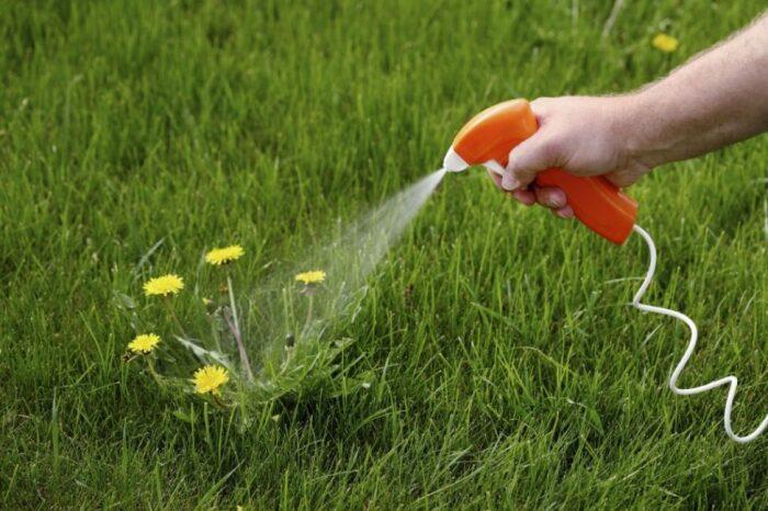 Процедуру опрыскивания рекомендуется провести дважды: весной и осенью / Фото: krrot.net