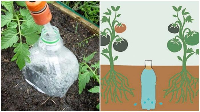Полив через бутылку обеспечивает целенаправленное попадание воды к корням растений / Фото: bukvarche.com