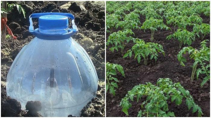 С помощью такого способа полива дачник легко поймет, насколько влажная почва / Фото: mizez.com