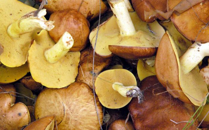 Такие грибы тоже вполне пригодны для пищи, и никто не говорит, что есть их нужно с червячками / Фото: artfile.ru