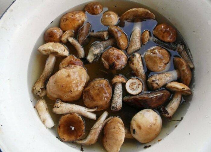 Нужно приготовить крутой соляной раствор и поместить туда все грибы минут на 20-30 минут / Фото: skajite-a.ru