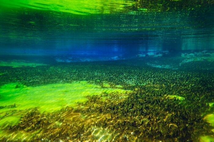 По различным данным видимость водоема равна около 100 метров / Фото: vashurok.ru