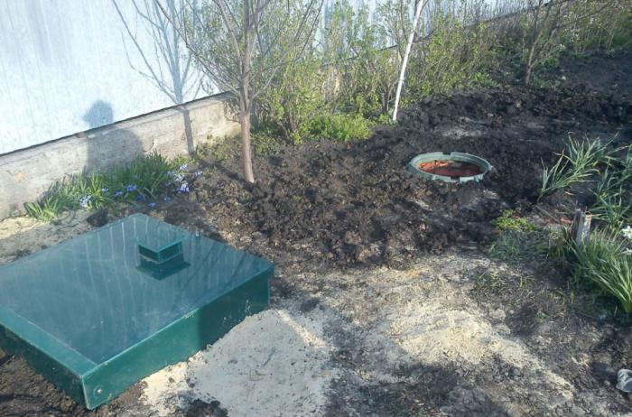 Такой биодренаж работает не сразу, так как нужно, чтобы деревья немного подросли / Фото: bio-systema.ru