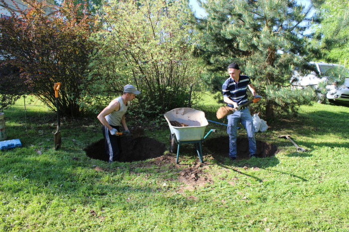 Некоторые деревья могут забрать из грунта и отдать в окружающую среду более 800 литров воды / Фото: vsevoda.ru