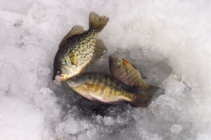 Существуют и другие рыбацкие причуды, касающиеся зимней рыбалки / Фото: youarecurrent.com