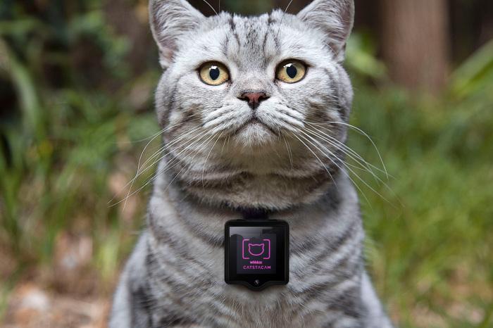 Благодаря встроенной в ошейник видеокамере с динамиком хозяин может следить за котом и даже разговаривать с ним / Фото: buro247.ua
