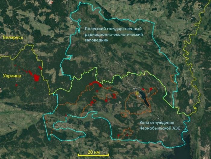 Чернобыльская зона разделилась на две отдельные части: одна из них оказалась на украинской территории, а вторая – на белорусской / Фото: forestforum.ru
