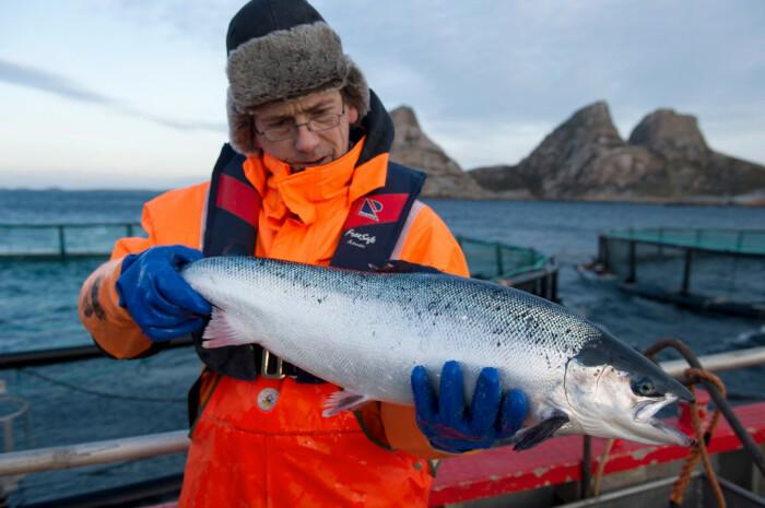 Именно из самых лучших побуждений в Баренцево море были подселены новые жители / Фото: Яндекс.Новости