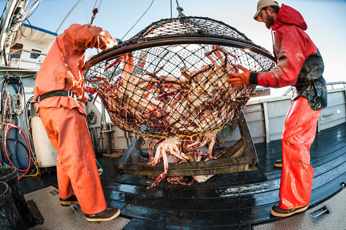 Норвежцы к переселенцу отнеслись недоброжелательно, здесь назвали краба «красной угрозой» / Фото: csmphotos.com