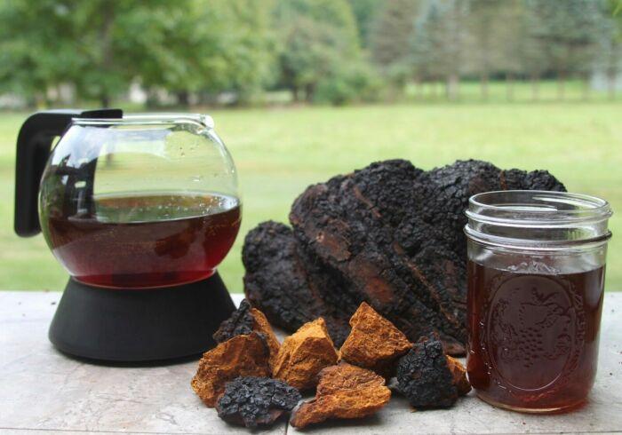 Местные жители заваривают из гриба целебный чай, укрепляющий организм / Фото: gastritinform.ru