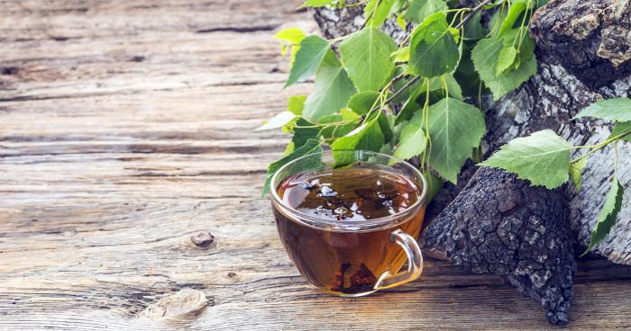 В одной из глав писатель описывает чудодейственный напиток из гриба. / Фото: innovativemedicine.com