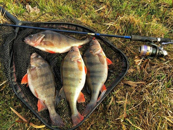 Применяя любой из описанных методов, рыбак может рассчитывать на хороший улов / Фото: blgi.ru