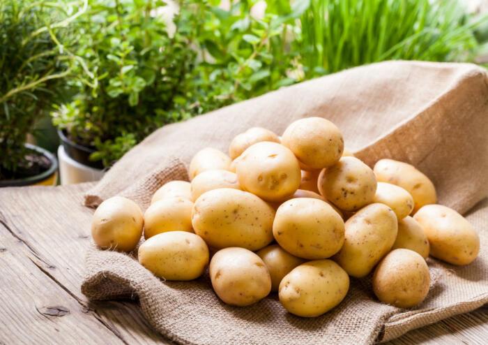 Желательно, чтобы картофель был гладкий, одного сорта и размера / Фото: modamix.net